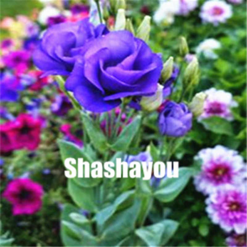 Ücretsiz Kargo 100 Adet Hibrid Eustoma Çiçek Sık Kelebekler ve Kullanışlı Arılar Zengin Aroma Bonsai Bitki Çiçek Bahçe için