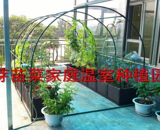 Klettergerüst Pflanzen : Freeshipping pflanzen klettergerüst akala flugzeug reben gemüse