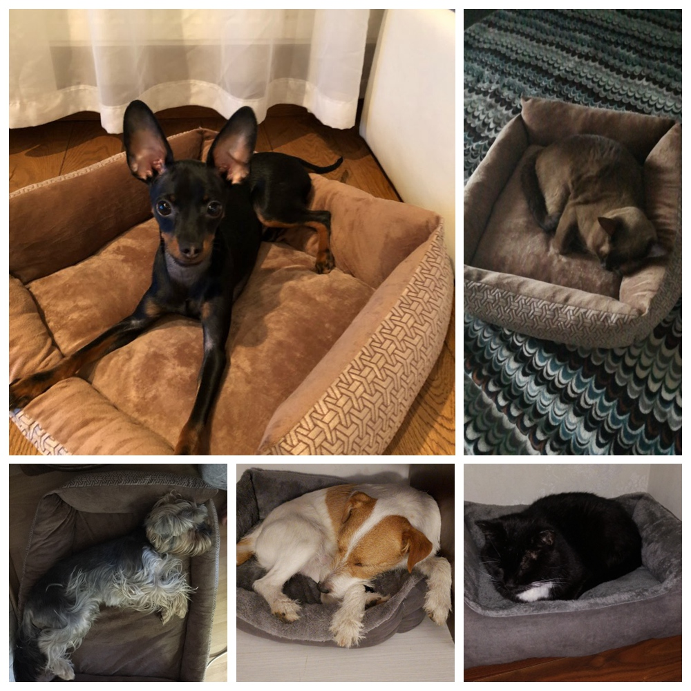 Pet Dog Bed Sofa Dog Waterproof Bed For Small Medium Large Dog Mats Bench Lounger Cat Chihuahua Puppy Bed Mat Pet House Supplies (32)