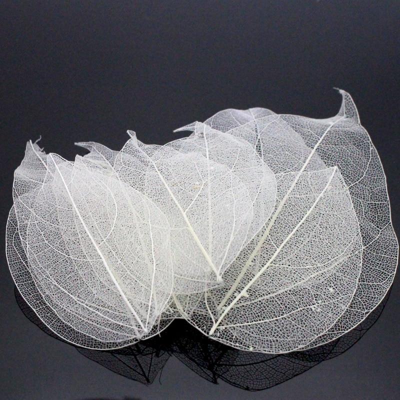 Lucia Crafts 36pcs /Bag  Multi-Color  Natural Skeleton Leaf Dry Leaves Scrapbooking  Girl DIY Material  C0704