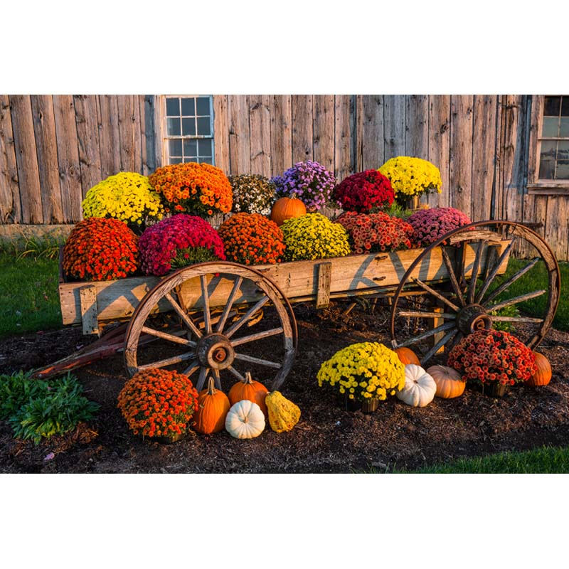 Countryside house  photo background wooden cart and flowers photography backdrops for  photo studio fotografia props HA-190 photo background wooden floor vinyl photo props for studio flowers photography backdrops small fresh 5x7ft or 3x5ft jieqx060