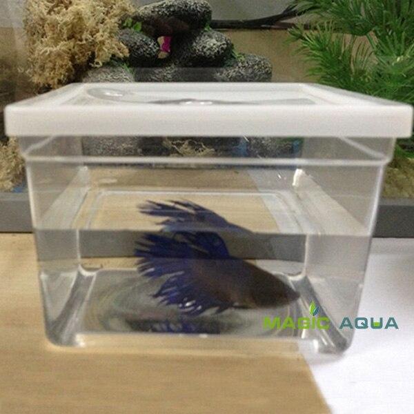 50 pcs/lot Mini Betta poissons combat Aquarium Aquarium prix de vente entier