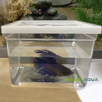 50pcs/lot Mini Betta Fish Fighting Fish Tank Aquarium Whole Sale Price