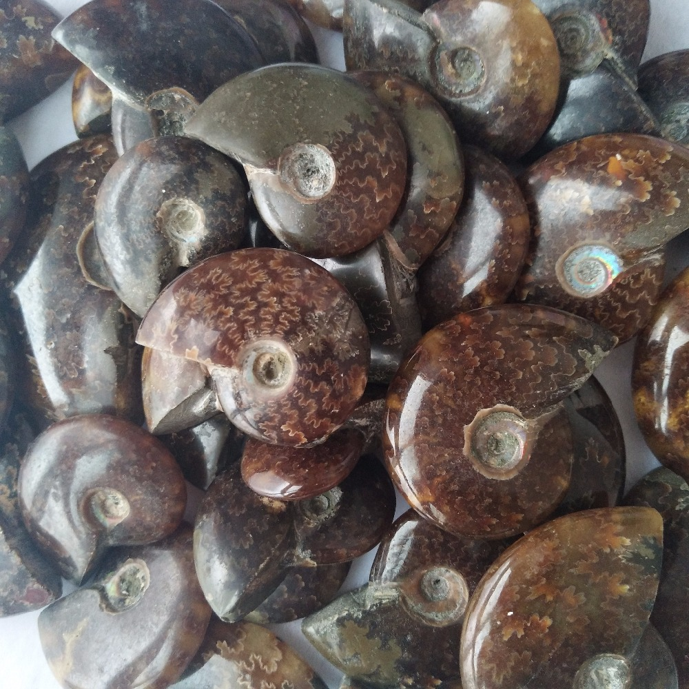 US $12 88 |100g/bag Natural nautilus fossil crystals  Specimens of  mineralized stone whelk fossils-in Stones from Home & Garden on  Aliexpress com |