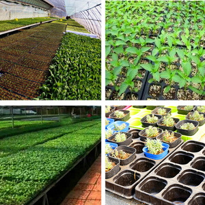 Image 4 - 10 個 32/72/105/128 細胞播種プラスチック保育園トレイ Maceteros 盆栽植木鉢緑多肉植物ポット種子ボックス