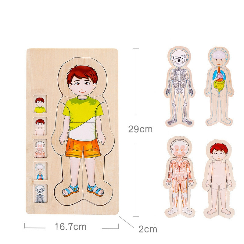 Multi-Layer Wooden Human Puzzles Human Body Structure Toys Intellectual Wooden Educational Toys Children'S Early Education Edu