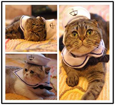 Pet headwear cat changing hat body changing headgear dog sailor navy suit bow tie hat Cape