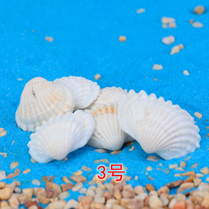 10-100PC set Factory direct selling fish Conch shells wax snail fish tank world Marine DIY materials crafts Home decoration dies