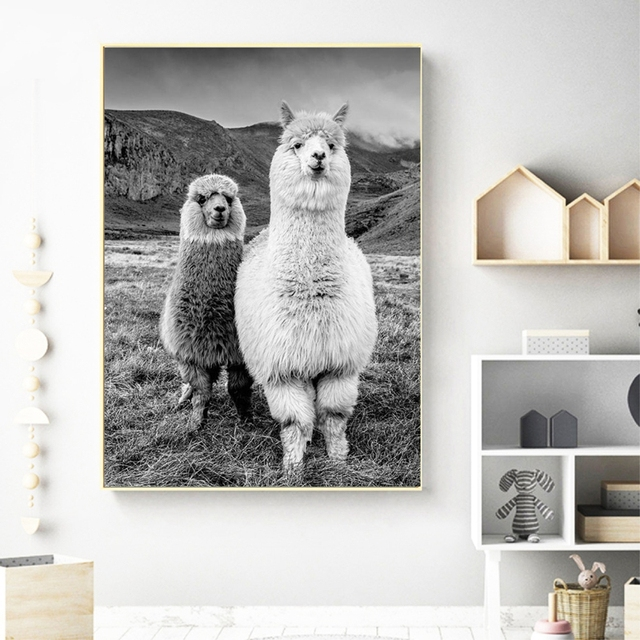 Alpaca Canvas Poster Mawgie