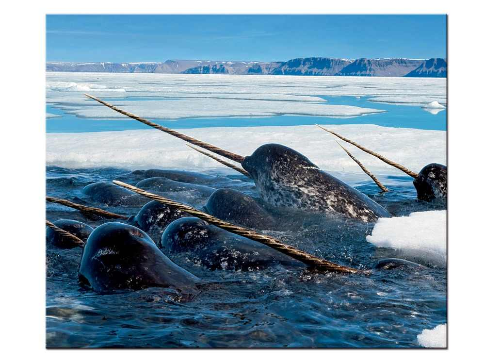 1 pieces / set Sea Life Narwhal canvas painting wall art poster print Pictures Living room home Decor wall hanging