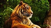 Свирепый тигр Art крупным планом фото исследование гостиная украшения фрески ткань плакат 43×24 «24×13» -016