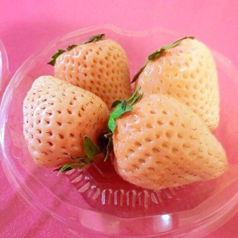 Pink Cream Strawberry Japanese Sweets Fruit Plant Home Garden Suculenta Plant Strawberries Edible Nutritious 300 Pcs in Bonsai from Home Garden