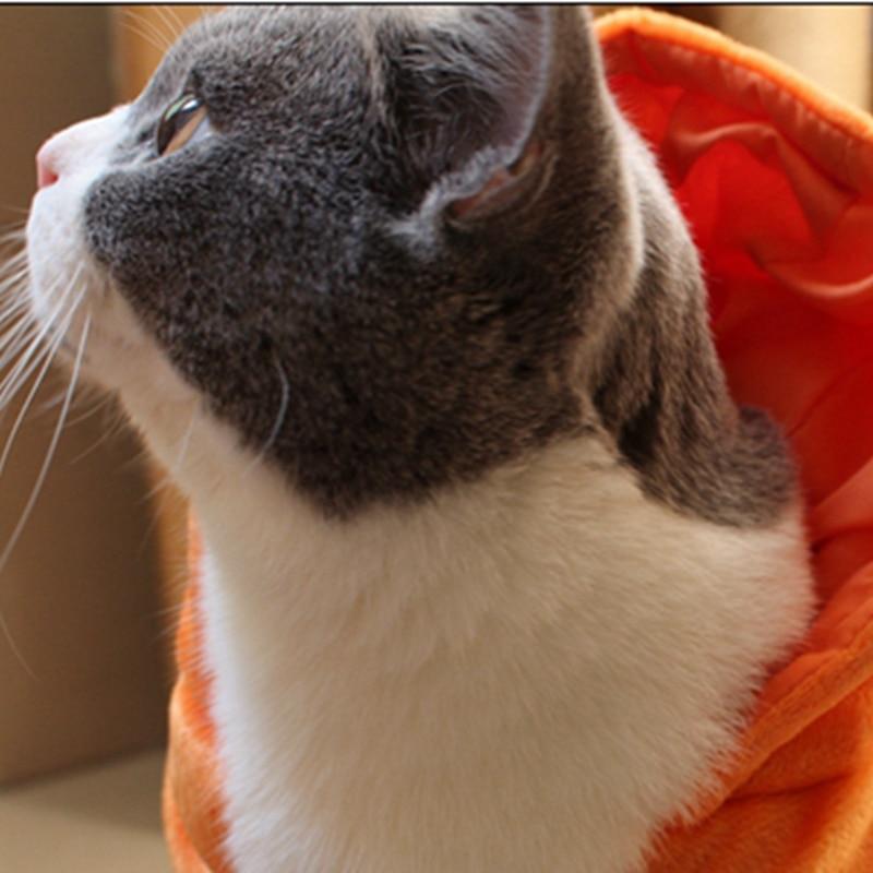 Halloween Costumi Gatto Gatto Caldo Costume del Cappotto Zucca Devil Cat  Vestiti Con Cappuccio Della Tuta in Halloween Costumi Gatto Gatto Caldo Costume  del ... 95095bcb79e