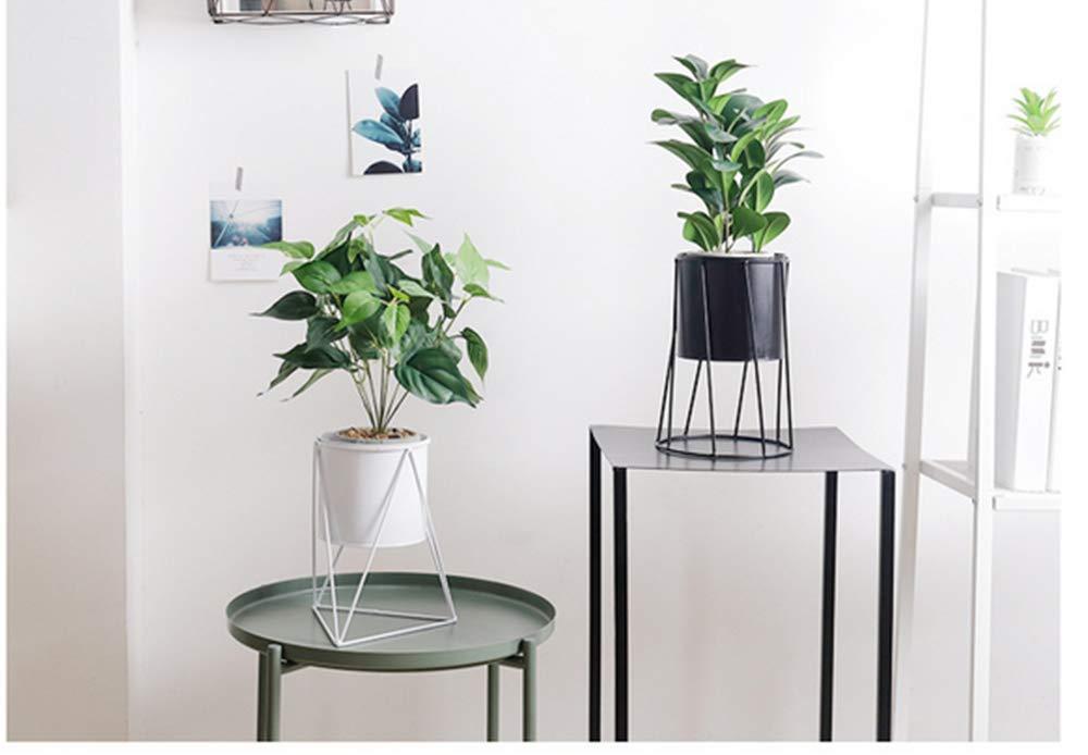 Plant commercial plantar rubber