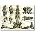 Sistema Esquelético Anatomia humana Osso Arte Cartaz Pano De Seda de Impressão 13x18 24x32 polegadas Mapa Do Corpo Fotos para a Educação Médica 010