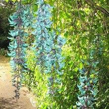 Rare Endangered Jade Vine Strongylodon Macrobotrys Flower Bonsai Perennial Blue 10PCS