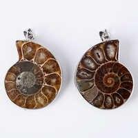 New Fashion 1Pc Natural Ammonite Seashell Fossils Snail Pendants Ocean Conch Reliquiae Pendant for Women Men Necklace Gift