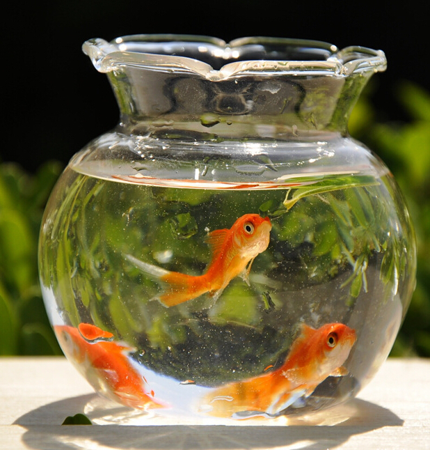 Online buy wholesale glass bowl vases from china glass for Fish bowl vase