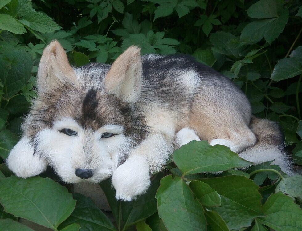 ٩(^‿^)۶Gran simulación dormir perro polietileno y pieles Husky perro ...