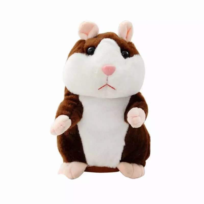 Dark Brown Hamster
