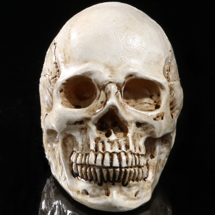 Medical Teaching Skeleton Skull Specimen Resin Crafts Halloween Decorations Accessories Furnishings Study Model