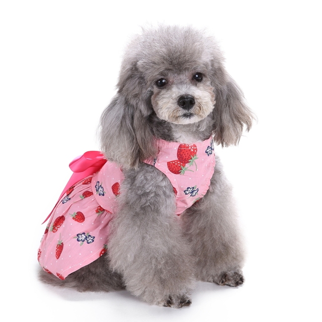 dog in dress