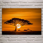 sunset african savan...