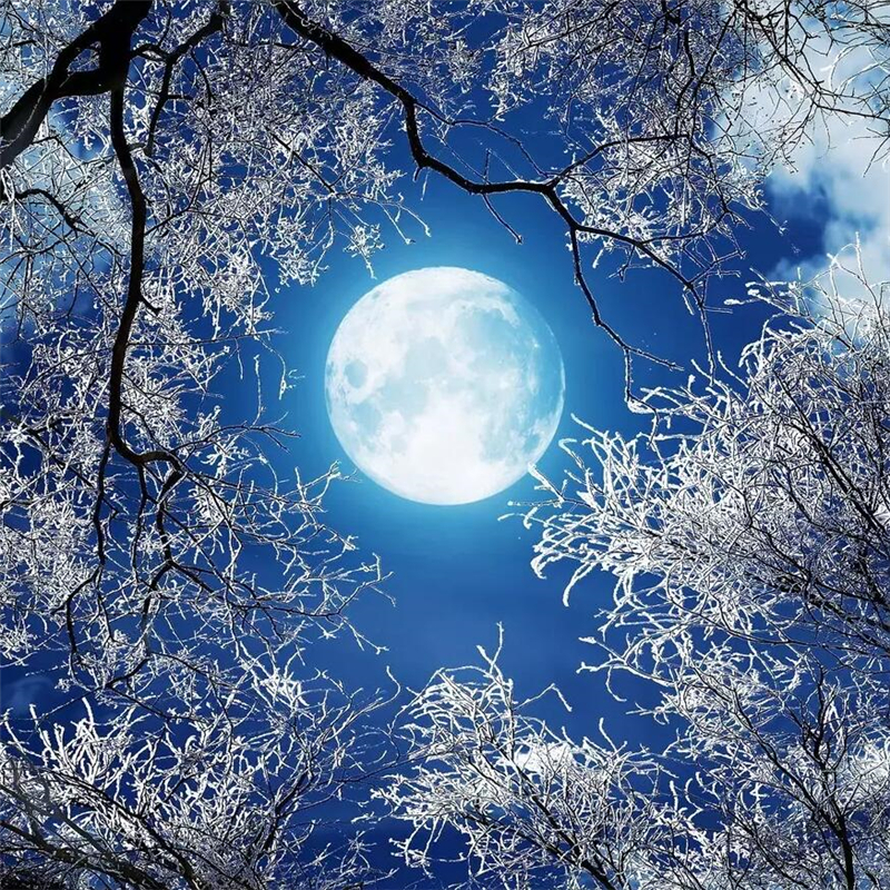 Us 8 85 41 Off Beibehang Ultra Hd Round Moon Forest Snow Scene Sky Night Sky Night Ceiling Zenith Painting Custom Large Mural Wallpaper In