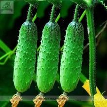Heirloom Autumn Spiny Little Cucumber Seeds, Al pack, 50 Seeds, Home-grown Vegetables Organic