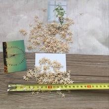 HappyKiss20pcs 1-2cm 2-3cm Mini Starfish Craft Decoration Natural crafts Sea Stars DIY Beach Cottage Wedding Decor hot shells