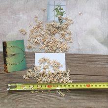 Yj1-2cm 2-3cm mini estrelada decoração artesanal natural estrelas do mar casa de praia conchas quentes para decoração de casamento