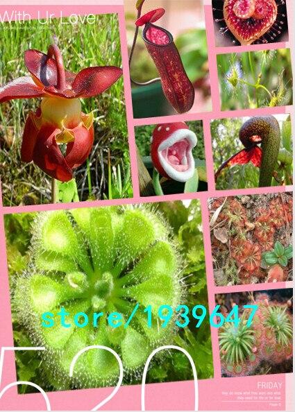 plante carnivore aliexpress