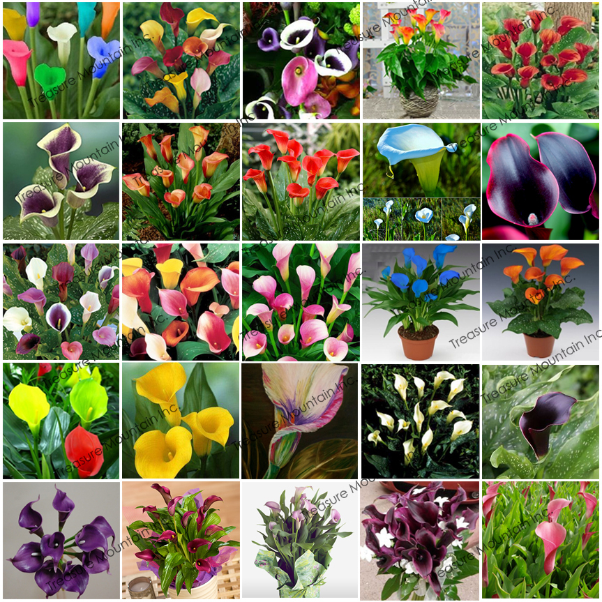 popular types of lilybuy cheap types of lily lots from china, Beautiful flower