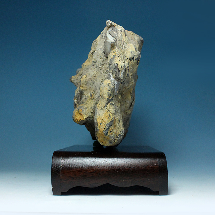 Natural Gifts British colony Shi Yan fossil mineral paleontology fossils teaching specimen collections 10