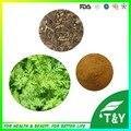 1000g Artemisia apiacea/Ajenjo Dulce Hierba/Artemisia annua/Melisa Extracto con el envío libre