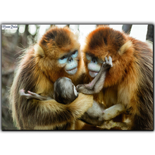 MOONCRESIN 5D Diamond Mosaic Monkey Family Diamond Embroidery Full Square Diy Diamond Painting Cross Stitch Decoration Animals mooncresin diy diamond painting cross stitch cartoon monkey diamond mosaic full round
