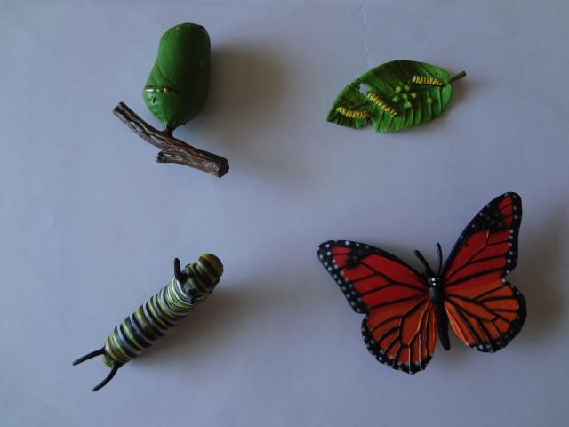 Pvc Figure Genuine Simulation Model Toy Butterfly   Life Cycle Set