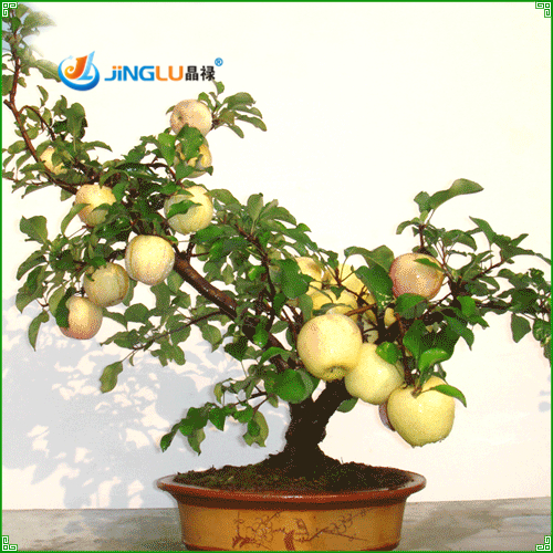 Green Apple Seeds Fresh Fruit Seeds Rare Mini Apple Bonsai Tree Green Apple Seed