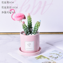 Simulation plant succulent potted cactus ornaments Nordic ins green fake flowers artificial living room home decoration