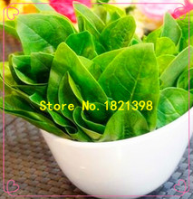 Free Shipping A Bag 50 Spinach Seeds Vegetable Salad Leaves Good Taste Non-gmo DIY Home Garden Plant Easy To Grow Hot Sale