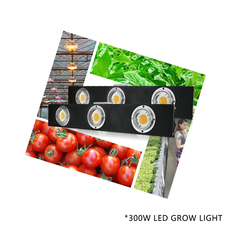 Image 4 - CREE CXB3590 300W COB Dimmable LED Grow Light Full Spectrum LED Lamp 38000LM=HPS 600W Growing Lamp Indoor Plant Growth Lighting-in LED Grow Lights from Lights & Lighting