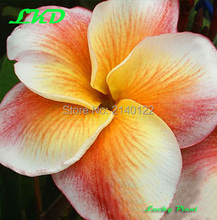 7 to15inch Rooted Plumeria Plant Thailand Rare Real Frangipani Plants no320-sherbettown