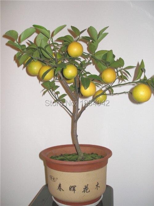 Popular crystal bonsai tree buy cheap crystal bonsai tree for Buy lemon seeds online