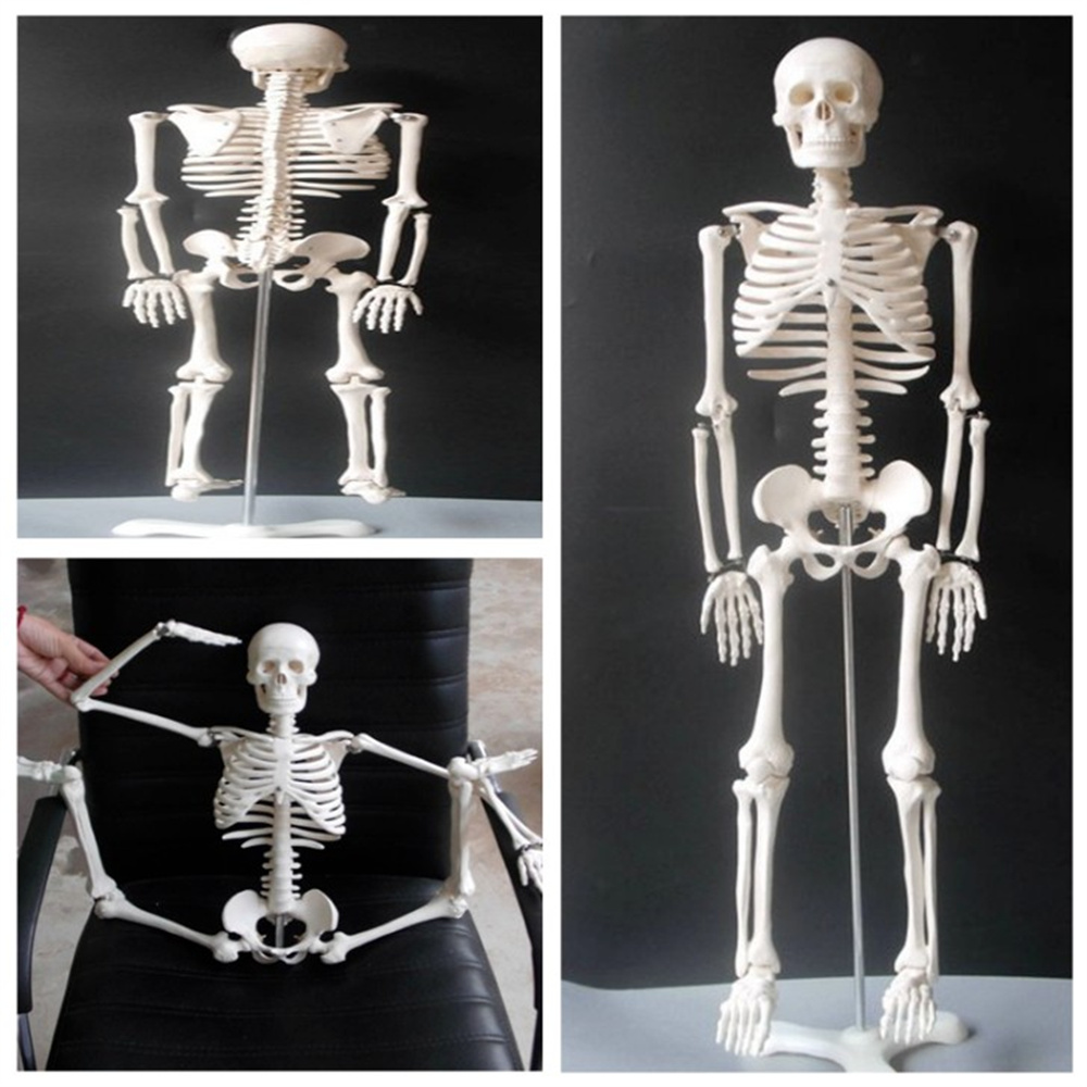 85cm Physique Mini Anatomical Skeleton Human Model Stand Poster