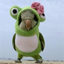 Одежда с птицами Pet Parrot пеленки салфетки ручной работы штаны с птицами милый Летающий костюм для Cockatiel Sun Parakeet монах попугай мягкая ткань