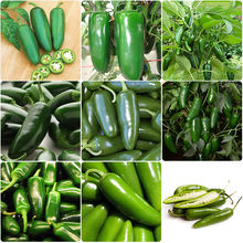 Non-GMO Home 200pcs Jalapeno Pepper Seed Organic Spicy Mexican Chili Home Garden Vegetables Hot Selling