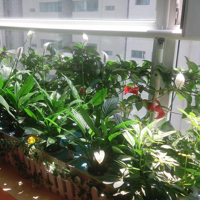tres conjuntos de bricolaje flor verduras hidropona sistema sin tierra de nutrientes tcnica de la pelcula