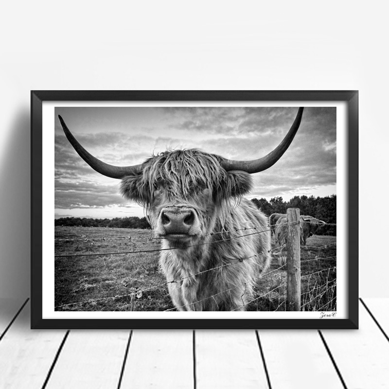 Australia wall art posters and prints black white highland cow canvas painting picture for living room yak home decor in painting calligraphy from home