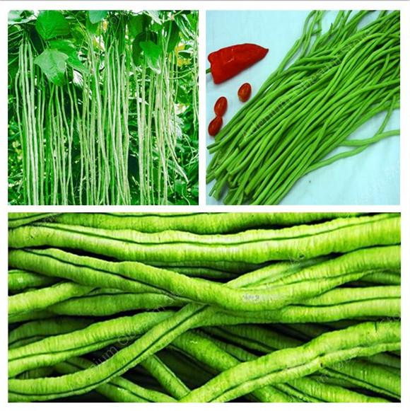 Hot 50 Pcs / Bag Mixed Beans Phaseolus Vulgaris Plant Bonsai Plants Vegetables, Green Beans, Natural Growth From Plant To Home