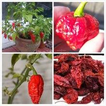 20 Organic Bhut Jolokia chilli Ghost Chile Seeds